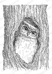 Owl in Tree Stamp