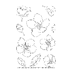 Spring Blossoms Stamp Set