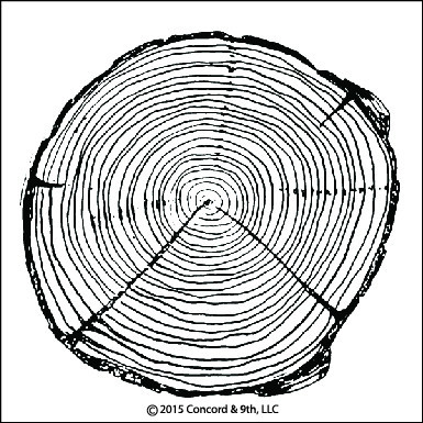Tree Ring Stamp