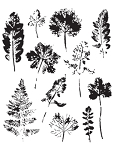 Leaf Prints Stamp Set